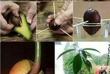 kertészkedés / ötletek, mit és hogyan lehet a kertben