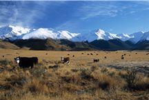 Uusi-Seelanti / Eläimiä ja elämää Uudessa-Seelannissa
