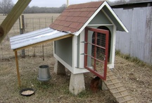 Chicken Coops and Chickens / This is our DIY chicken coop we designed using an unused doghouse and our chicken photos via www.GlassSlipperRestorations.com and others great ideas for chickens too!