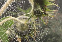 Tisseuse de soie