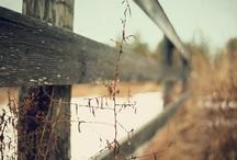 fence / by arndthcrnr
