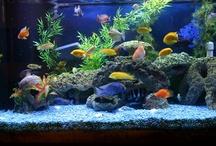 Fresh Water Aquariums~Fish / by Renee Mobley