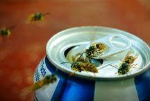 insecten plagen