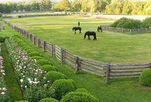 My dream farms