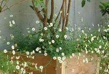 bloempot voordeur