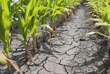 Fermier in Romania / Informatii utile pentru agricultori. http://www.antenasatelor.ro
