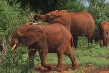 """Kenya """" Safari photos """" / Safari dans des magnifiques décors de l' Afrique."""