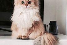 FAUNA / Meow.