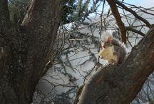 Squirrel Central