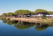 Wohnmobilstellplätze / Alle Stellplätze Sardiniens findest du auf der Seite www.CamperSardo.de - hast du noch einen geheimen Tipp?