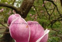 Salil P Kawli PHOTOGRAPHY / My Portfolio