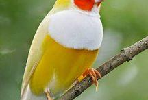 Burung Indah di Alam Bebas