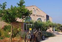 Domaine Terre de Mistral / Visite du vignoble et des chais au Domaine Terre de Mistral dans l'appellation Côte de Provence en Provence avec winetourbooking.com