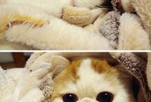 Cute / So many cute animals will make your head explode. / by Guadalupe Medina