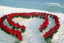 Beach Wedding set ups / Wedding display set ups for a beach destination wedding or vow renewal.