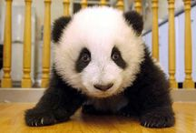 Panda Bears and All the other Bears TOO  / by Rebecca Raney