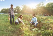 Find Green in Austin, Texas / Find green, organic, sustainable products and services in Austin, Texas
