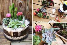 Plantas / by AleMcAllister Pinkpop