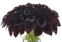flowers :) / by Cheryl Annotti