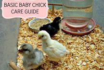 Chicks R Cool