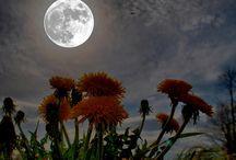 Girasoli con luna