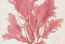 Bradbury Nature-Printed