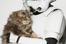 Cat Wars / May the Miaou be with you !