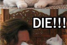 Cats... / funny cat memes