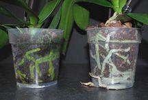 Növényápolás