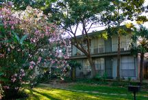 Greater Houston Apartments for Rent / When you live in one of our communities, your needs are answered by a team of professional, caring team members who take pride in providing a great place to live. You'll also enjoy unmatched services, from modern conveniences like paying your rent online to a guaranteed quick response to any maintenance issues. And you'll find our communities are not only of the highest quality, but also in top locations.