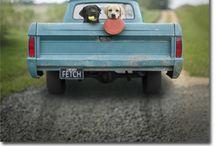 Trucks Preferably With Dogs / by Wanda Richardson