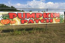 Our Pumpkin Patch Is Open! / Our pumpkin patch is open to the public! We are in the process of getting everything set up. It will be growing and improving daily! Come see us! 4940 Seymour Highway (940) 692-7100
