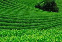 Nature - Green