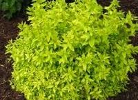 petits arbustes