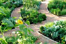 Square foot gardens / by Tina Kauffman