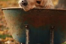 DOGS / by MARIAJOSE CASSOLA