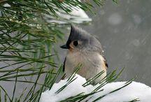 Winter / Talvi <3