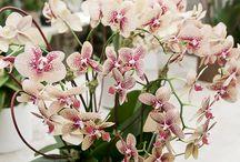 Arrangements / Arrangements available at Palm Beach's Floral Emporium or online at www.FloralEmporiumOnline.com