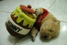Duppy Pogs