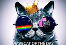 Wave.cat / Quotes