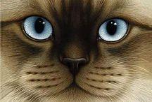 ♡✽ Cat Eyes ✽♡