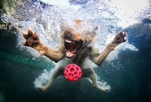 Animal Love / Cuteness Overload. / by Weitzman Agency