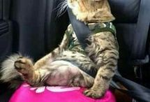 hülye cicák