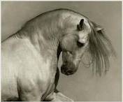 Horses / by Anamarija Puljko