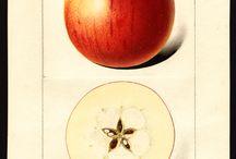 Объем на фруктах в ботаническом искусстве