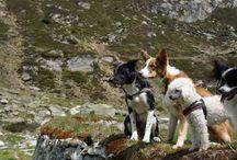 Wandern mit dem Hund / Das Tauferer Ahrntal, das Pustertal und die Dolomiten sind ein Eldorado zum Wandern. Zahlreiche Routen können Sie mit Ihrem Vierbeiner zusammen erforschen. Hier einige Wandervorschläge für Sie und Ihren Liebling – nicht zu steil und immer ein kühles Nass in der Nähe!