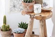 suculentas e jardinagem