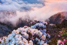 Doğa Manzara - Nature landscape