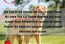 Tierisches / Motivierende Gedanken, Sprüche und Zitate rund um das Tier und alles tierische :-)