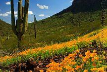 I Love You, Arizona